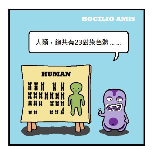 bocilio-amis-junk-DNA-P001a