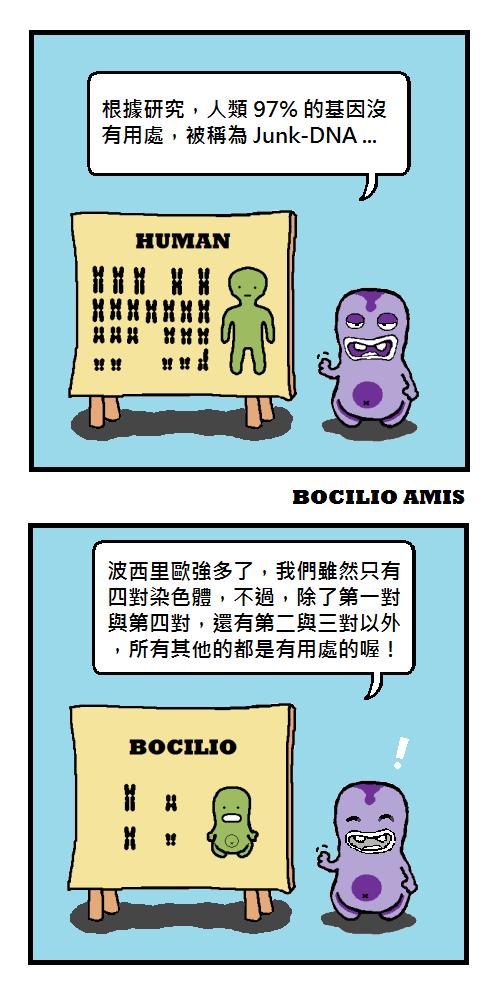 bocilio-amis-junk-DNA-P002a